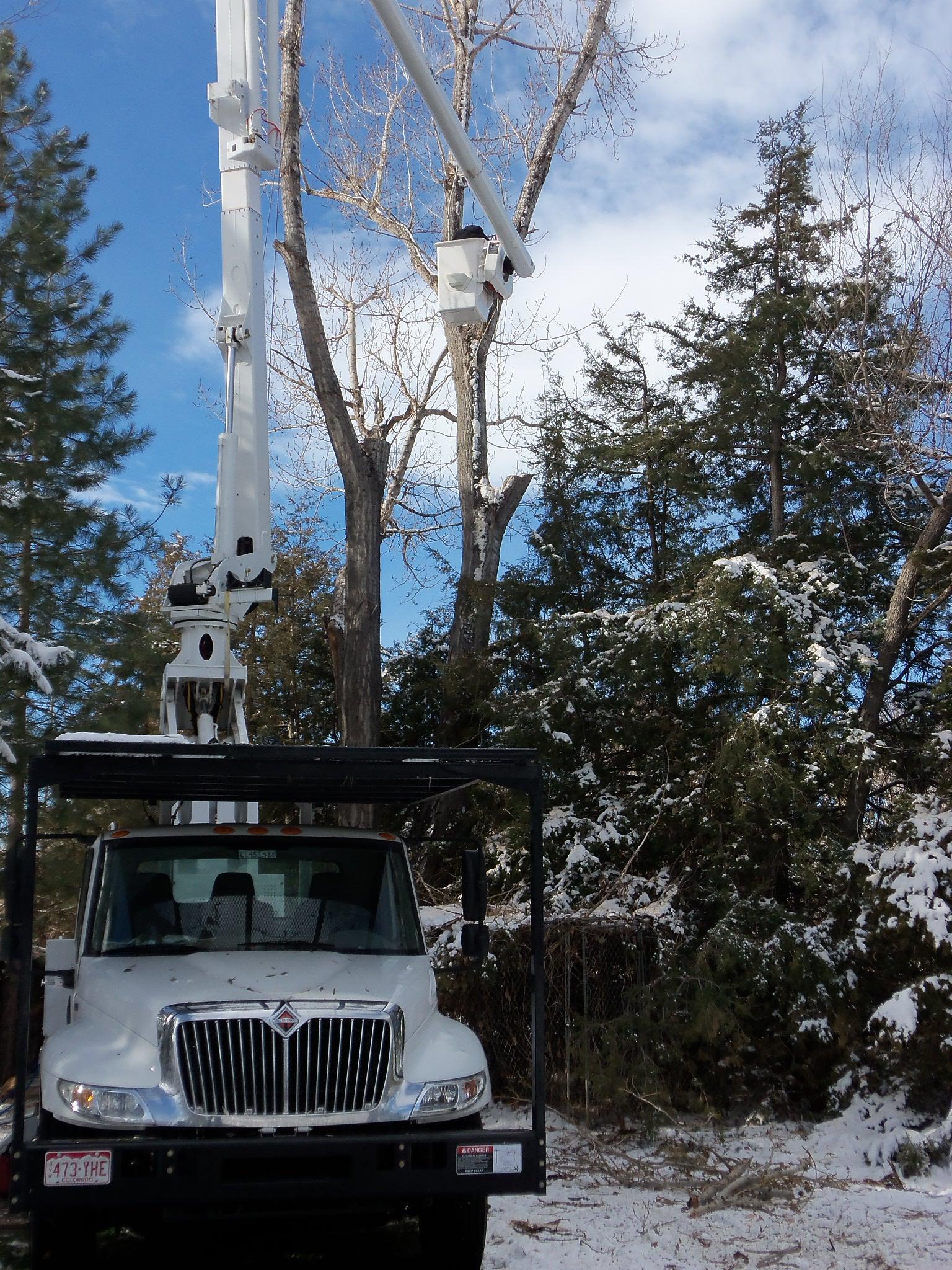 Newell-Bros-Winter-trees-004