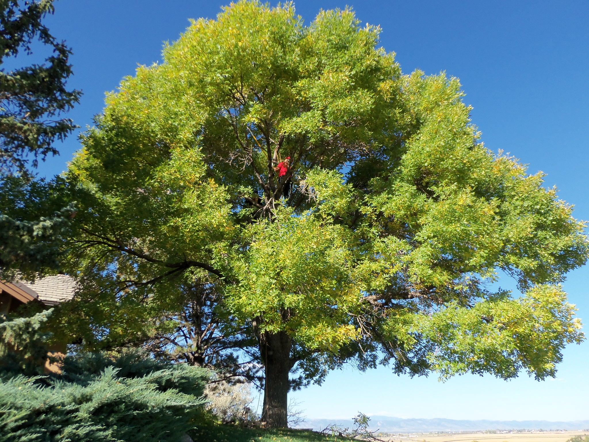 Newell-Bros-big-tree